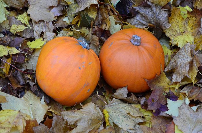 Autumn Bright Orange Gourds Outdoors Pumpkins Seasonal Food Vegetables