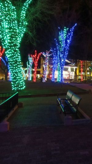 Annual holiday lights at the Courthouse Plaza. Bench HUAWEI Photo Award: After Dark Architecture Building Exterior Built Structure Celebration Christmas Christmas Decoration Christmas Lights City Decoration Illuminated Light Lighting Equipment Multi Colored Night No People Outdoors Park Park - Man Made Space Tree