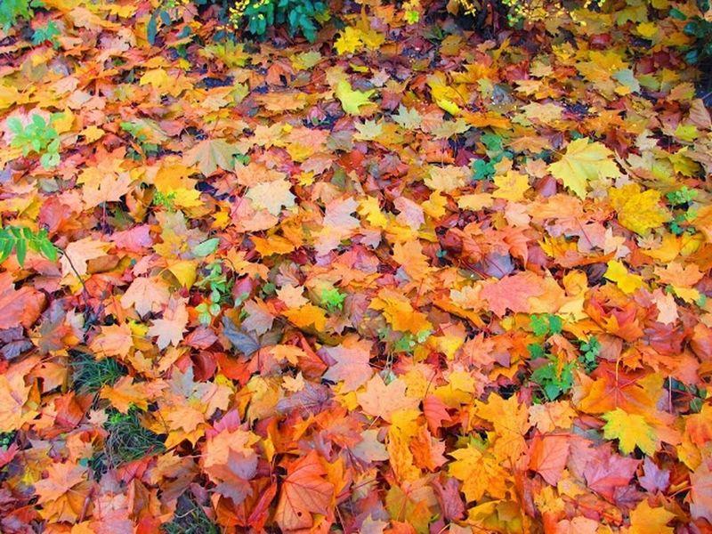 Sound Of Life Farbenfroh Herbstrascheln Laub Inspirations Jahreszeiten Fotoliebe Wunderschön EyeEm Nature Lover Golden