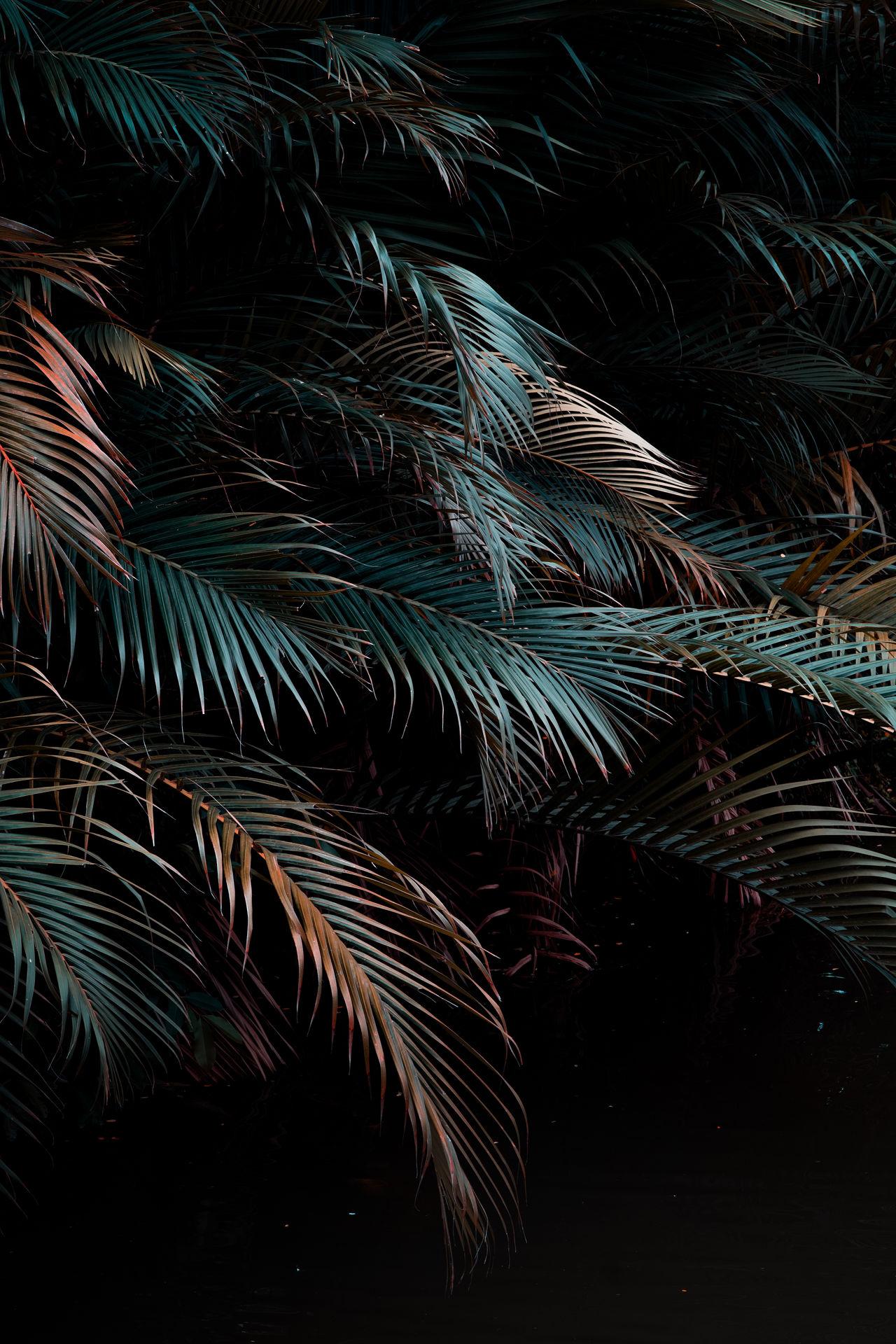 Palm tree at night