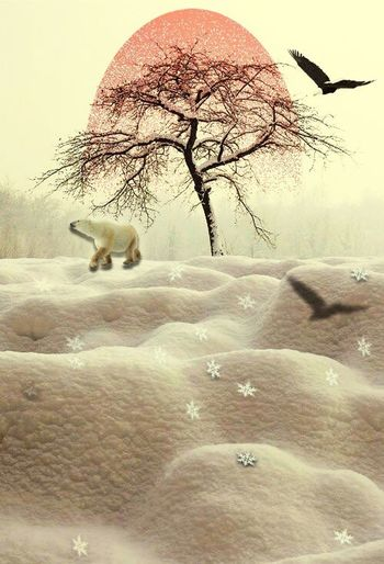 Winter walks Animals In The Wild Winter Nature Snow Cold Temperature Photography Atmosphere ArtWork New Project Artistic