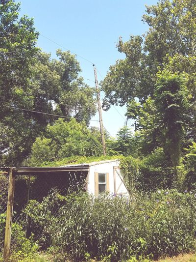 The old shed. Tree Day No People Architecture Building Exterior Built Structure Window Outdoors Sky Green Color Nature