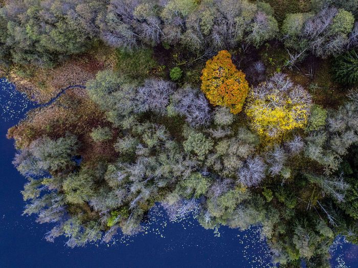 From above Autumn Autumn Colors Day Drone  Dronephotography Fall Fall Beauty Fall Colors Nature No People Outdoors Sweden Water