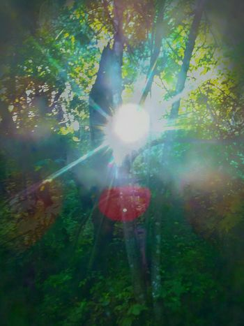 Unapproachable Light!! ReachOuT. Touch my eyes! MDO7117 EyeEmNewHere Multi Colored Forest real life sparkle Beauty In Nature Dazzle EyeEmNewHere
