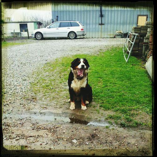 Eigentlich Ist Sie Ein Löwe Bester Hund So Much Love For Her Forever! I'm so happy because i've got the best dog!♥