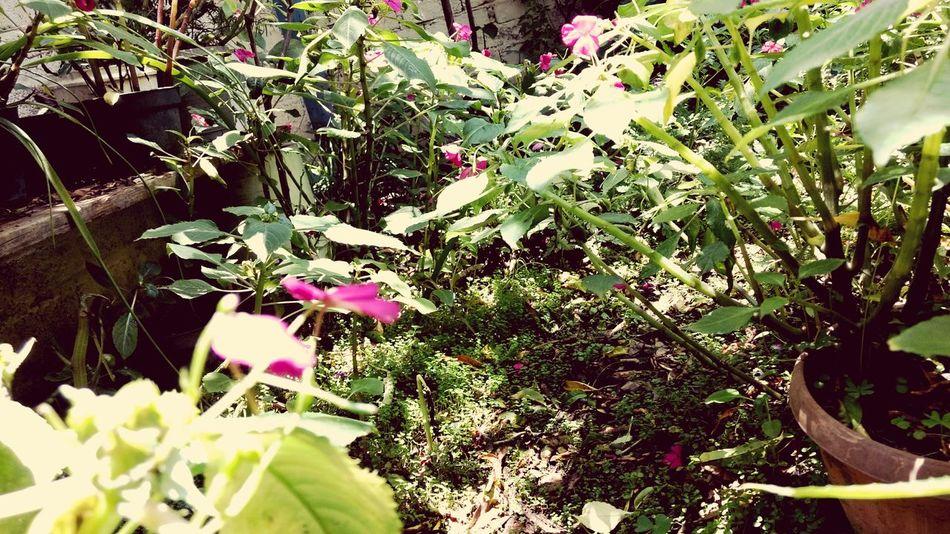 Las cosas que pensamos y no decimos Flower Plant Rose - Flower Rose🌹