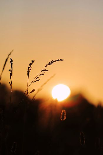 EyeEm Selects Sunset Sky Sun Beauty In Nature Silhouette Orange Color Tranquility Nature Scenics - Nature Tranquil Scene Focus On Foreground Growth Sunlight Plant No People Outdoors Close-up Idyllic Copy Space Non-urban Scene