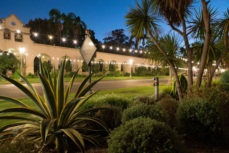 Power Architecture Balboa Park Beauty In Nature Building Exterior Built Structure Clear Sky Electric Grid Electricity  Energy Grass Growth Illuminated Lighting Equipment Nature Night No People Outdoors Palm Tree Park Plant Residential Building Sky Street Light Tree