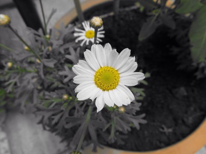 PowerShot SX130IS Canon F/X Bavaria Franconia Franken Bayern Taking Photos Blumen Flowers