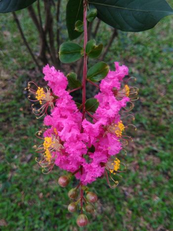 flower pink beautiful Nature Plant Flower Growth Outdoors Day No People Beauty In Nature High Angle View Hanging Fragility Winter Close-up Freshness Flower Head