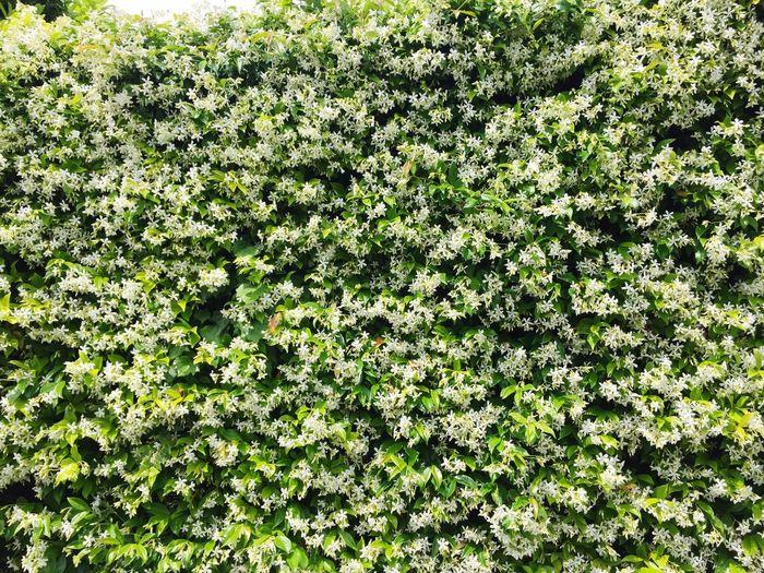 Flower Wall Mur