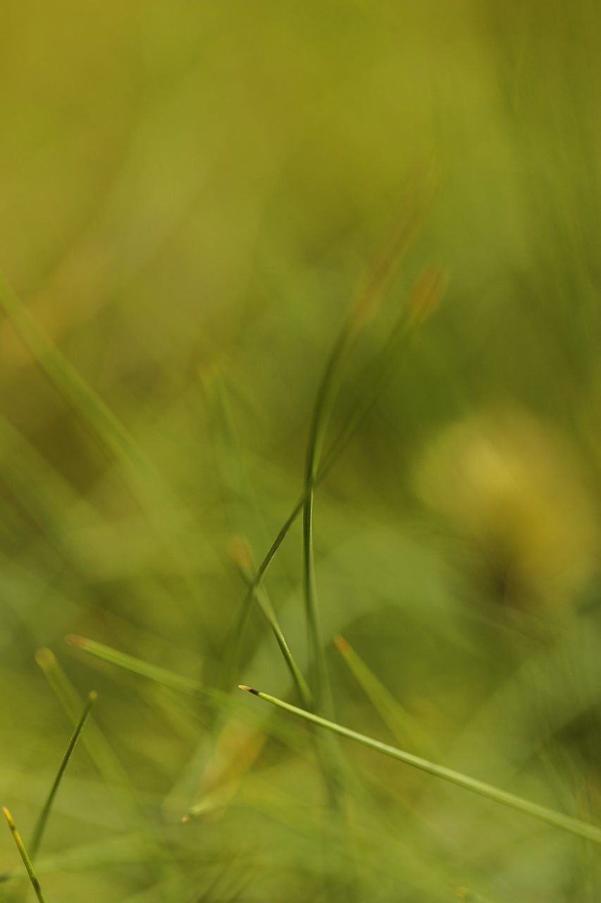CLOSE-UP OF GRASS ON LAND