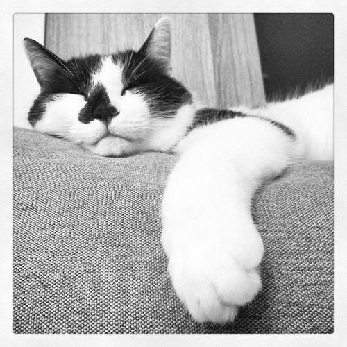 WokeUpToThis Catsofwarsaw Lolathecat