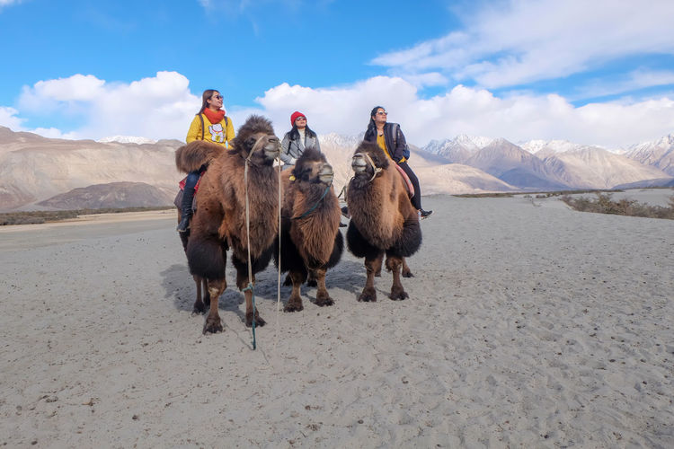 Leh Ladakh October autumn mood Cold Temperature Beauty In Nature Sky Mountain Camal Sand Dune Young Women