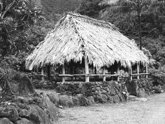 Thatched Roof Day Outdoors No People Grass Tree Black & White Black And White Collection  Black & White Photography Limahuli Gardens Building Exterior Built Structure Architecture Hut A Look Into The Past Man Made Object Life Back Then