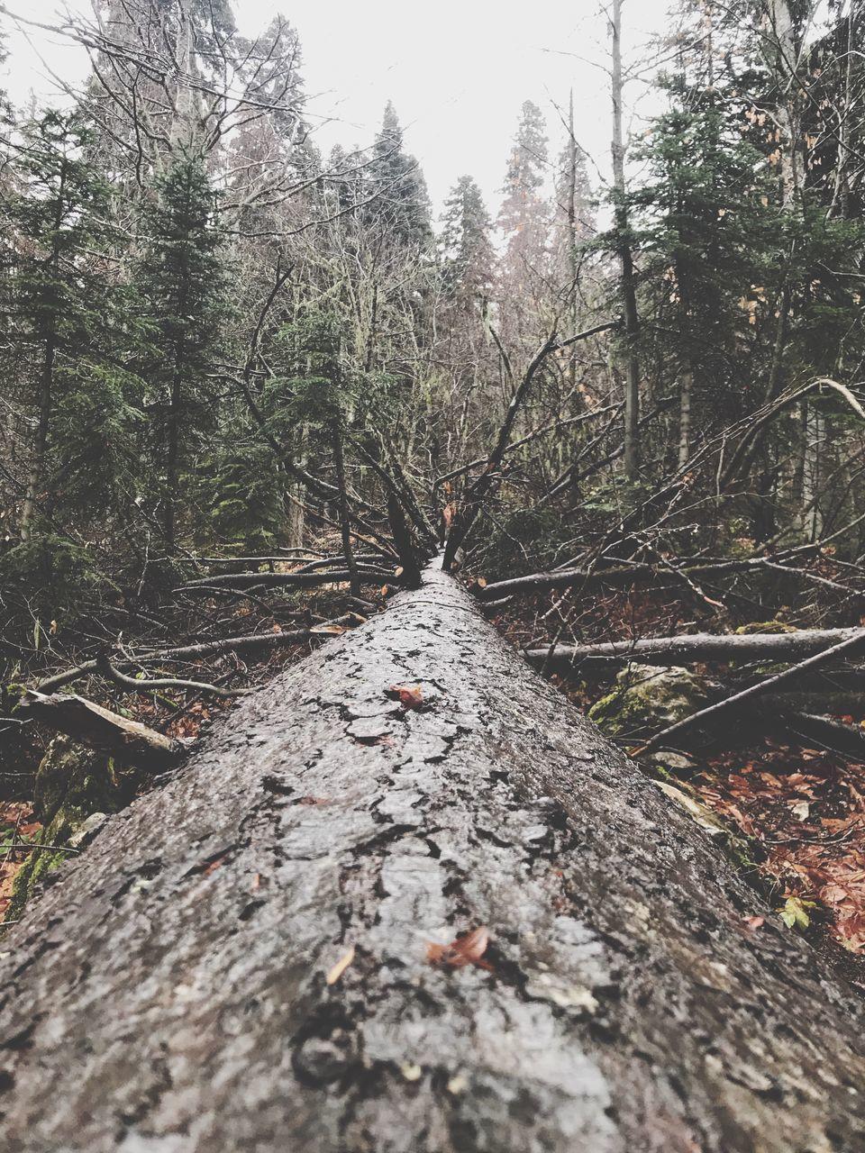 DEAD TREE ON ROCK