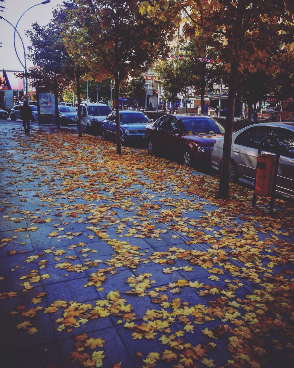 autumn, change, leaf, tree, nature, car, street, outdoors, growth, beauty in nature, day, no people, city
