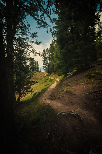 The Path My Best Photo Tree Plant Nature Tranquility Land Forest Sky Tranquil Scene Growth Environment No People Landscape Beauty In Nature Scenics - Nature Non-urban Scene Day Outdoors Direction Green Color Grass Trail Südtirol Alto Adige Hiking