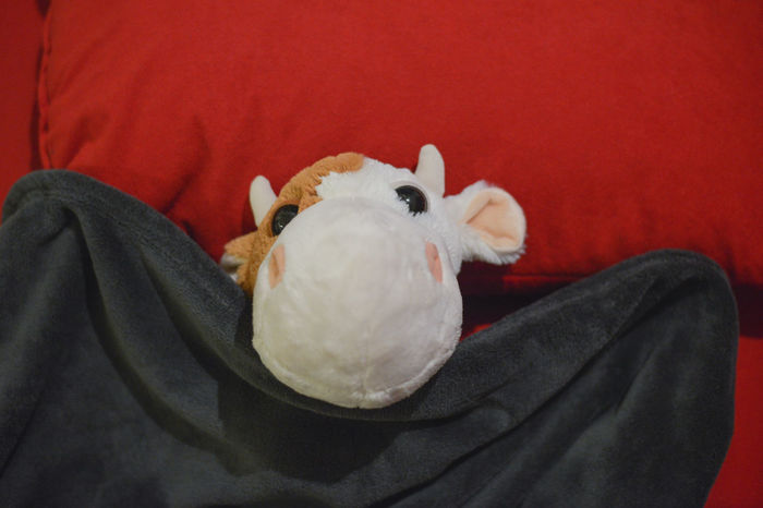 Animal Chlid Close-up Cute Day Fluffy Fluffy Animals Fluffy Love Food And Drink Going To Sleep Lieblingsteil One Person Sleep Sleeping Sleeping Animal Tourism Toys Valentines Day Valentne