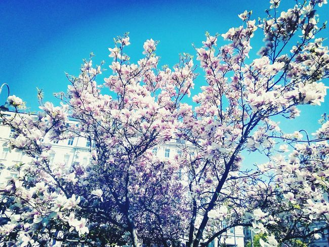 Nature Clear Sky Beauty In Nature Flower Head Low Angle View Sky Day No People Blue Outdoors Flower Close-up Backgrounds Growth Tree Freshness Fragility First Eyeem Photo