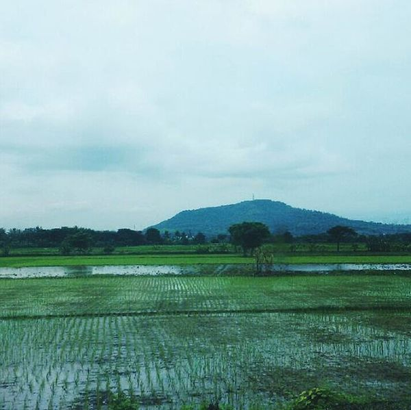 . . . . . . . . Mountain Green INDONESIA Sky Sawah