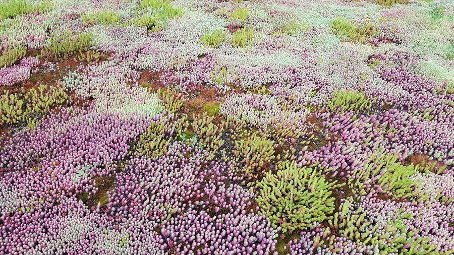 Succulent Plant Succulents Backgrounds Full Frame Close-up Grass