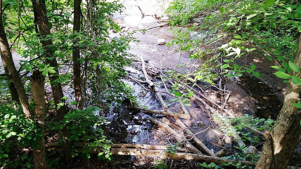 Nature Huron River Ypsilanti Water Flowing Water Bridge