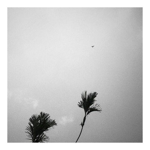 Terbang bang bang bang bang bang Bangsatedongbang Setusukduatusuk Photography Art bw indonesia sky TukWakGak