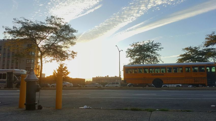 Paint The Town Yellow Tree Day Outdoors Sky City No People Nature Scoolbus Yellow Yellowbus Street Streetphotography Sunset_collection Sunset
