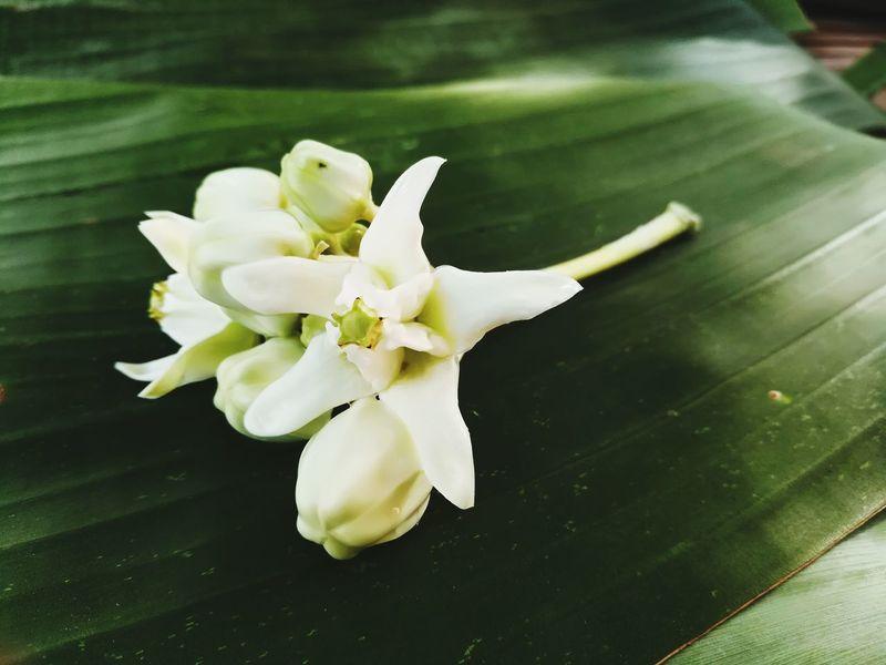 Flower Head Freshness Flower Beauty In Nature Crown Flower