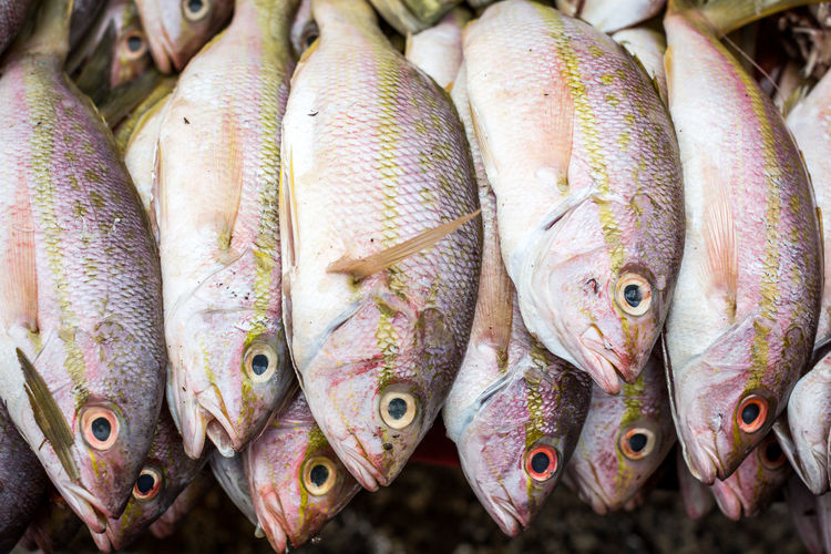 Yellow snaper fish Abundance Backgrounds Choice Close-up Collection Color Dead Animal Display Fish Fish Market For Sale Freshness Full Frame Large Group Of Objects Market Market Stall Nicaragua Outdoors Raw Raw Food Retail  Sale Seafood Variation Yellow Snaper