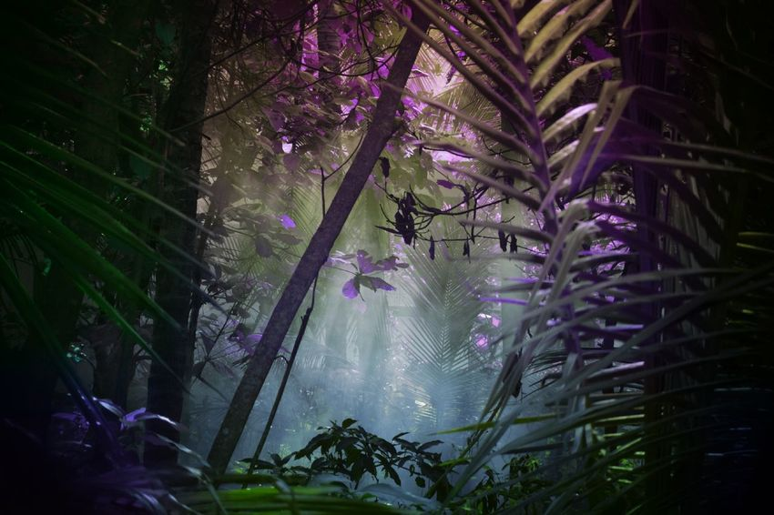 ....in.. tO... mY... dReams... witH... yOu... Nature Foggy Morning View Forest Landscape Colorful Purple Green My World My Dream World Togetherness Silence Of Nature Expressions Dreams Kerala