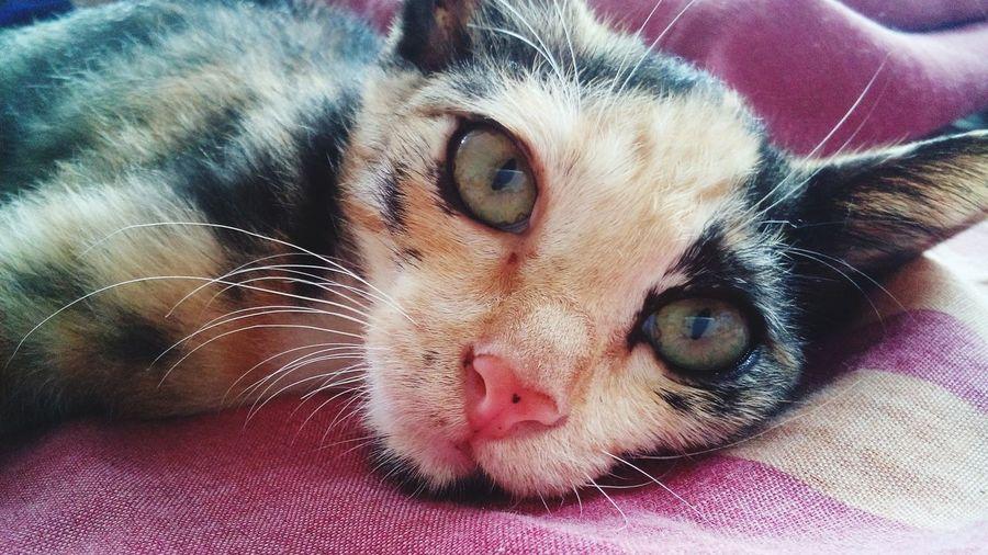 Cat Pet Photography  Pet Love Pet Photograph
