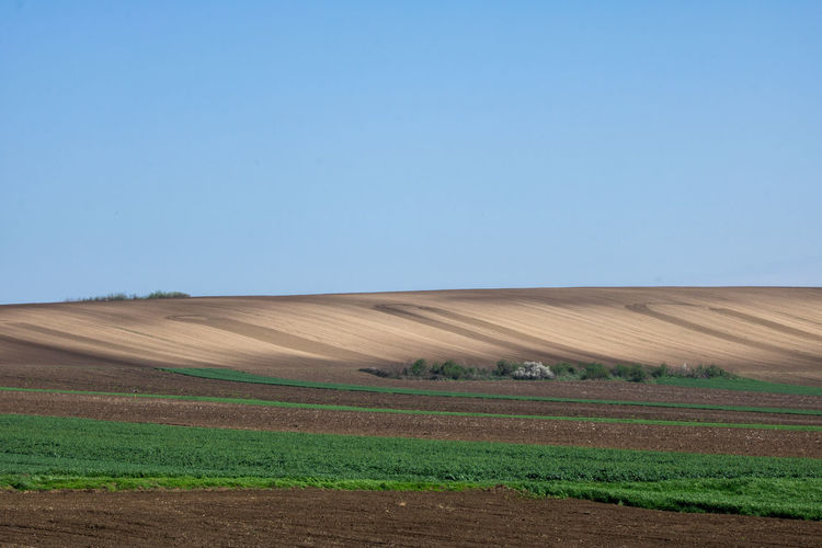 Plowlands in Vojvodina Colours Green Agriculture Agronomy Arable Land Blue Day Farm Field Husbandry Land Landscape Nature No People Outdoors Plough Ploughed Field Ploughland Plow Plowed Field Plowland Rural Scene Scenics - Nature Sky Tranquil Scene