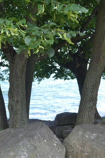 Marblehead Marblehead Lighthouse Marblehead, OH Lighthouse Beauty In Nature Branch Day Growth Nature No People Ohio Outdoors Tree Tree Trunk Water