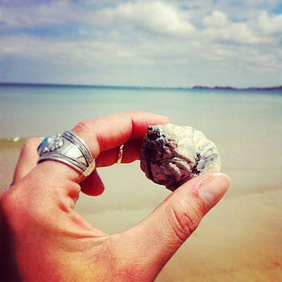 Sweet Bretagne Bretagne Nature Life Is A Beach Shell Sunny Day Beachphotography