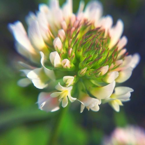 Number fourteen of my series | edited woth the Viewmatic photo app | shot woth the OlloClip lens Macro Series 2013