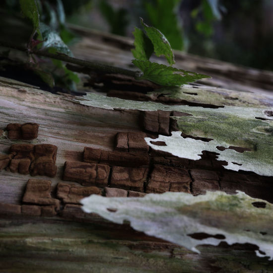 Close-up of log on tree trunk