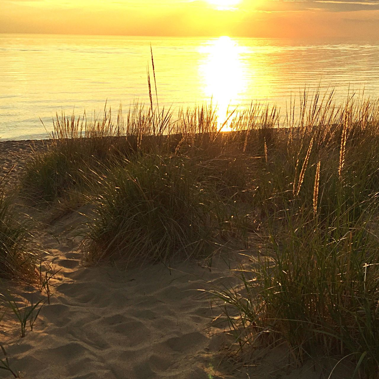 nature, beach, sea, water, sunset, tranquil scene, grass, sand, marram grass, tranquility, sunlight, scenics, beauty in nature, horizon over water, sun, outdoors, no people, growth, sky, sand dune, day