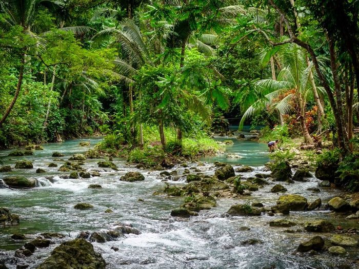 Iamonmywaytoeverywhere Traveling Philippines Kawasan Falls Water Plant Tree Beauty In Nature Growth Nature Green Color Scenics - Nature Forest River