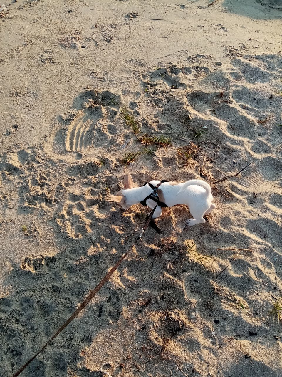 HIGH ANGLE VIEW OF HORSE ON SAND