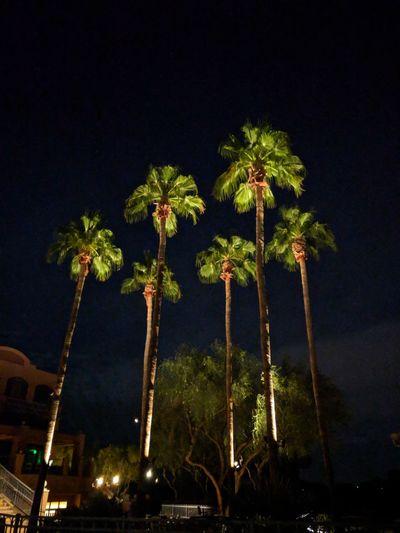 palm trees PALMTREES 🌴🌴🌴 Palm Tree Desert Night Palm Trees At Night Night Arts Culture And Entertainment Amusement Park Low Angle View Tree Illuminated Amusement Park Ride