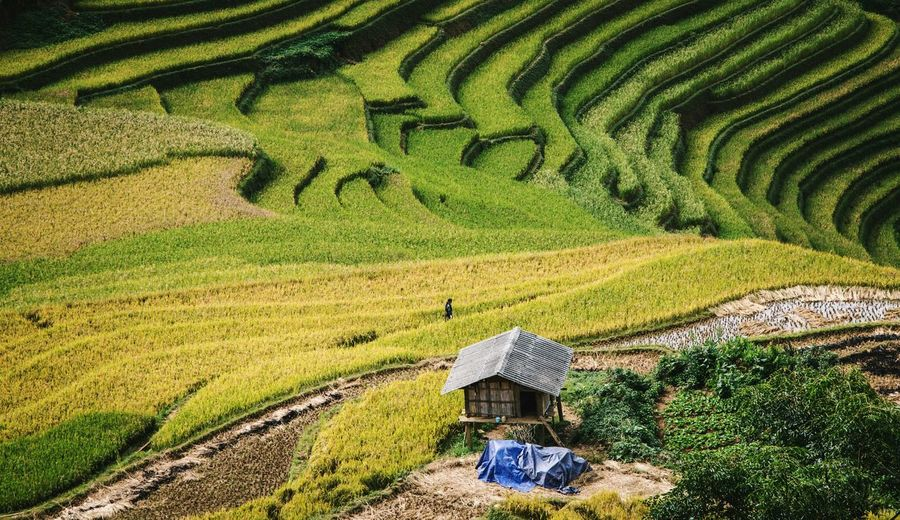 Green Color Growth No People Outdoors Beauty In Nature Nature Close-up Day Viet Nam Mu Cang Chai Nature Vietnamphotography Travel Beauty In Nature