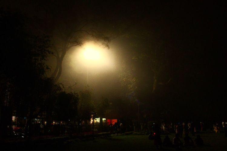 Night Tree Dark Illuminated Street Light Outdoors Fog Day First Eyeem Photo