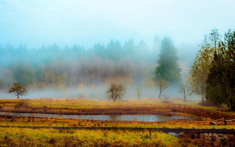Beauty In Nature Day Fog Landscape Nature No People Outdoors Scenics Sky Tranquility Tree Water