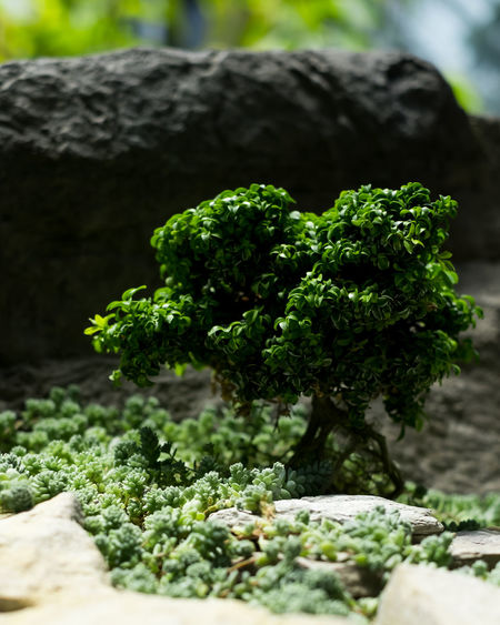 Close-up of green leaves on rock