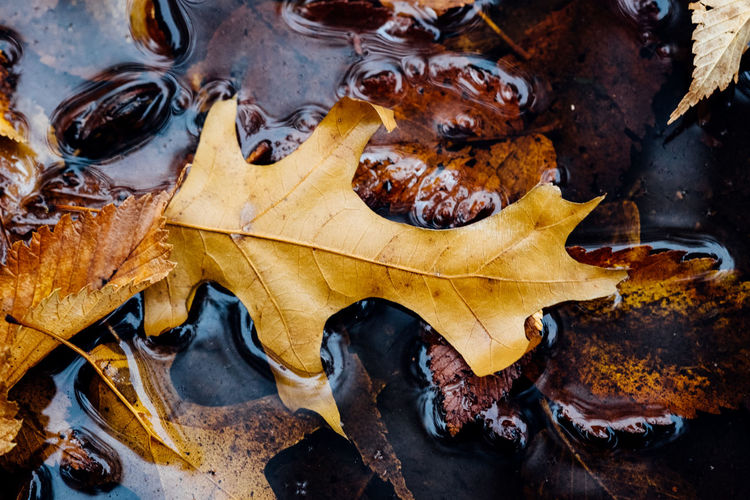 Close-Up Of Autumn Leaves In Puddle