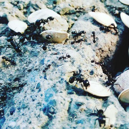 Strong Karınca Hello World Animal Photography Böcekk Yaşamdankareler Hayvanlaralemi Benimgözümden Garden Photography Minikler Davetsizmisafir