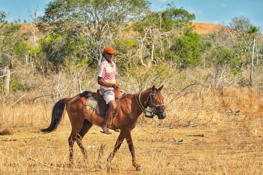 Horse One Person One Animal People Vitória De Baixo Batalha Do Piauí Beauty In Nature Parnaíbafotoclube The Week On EyeEm Nikonphotographer Nikon D3200 Nikon Photographer Photography Rural Scene Brasil Landscape
