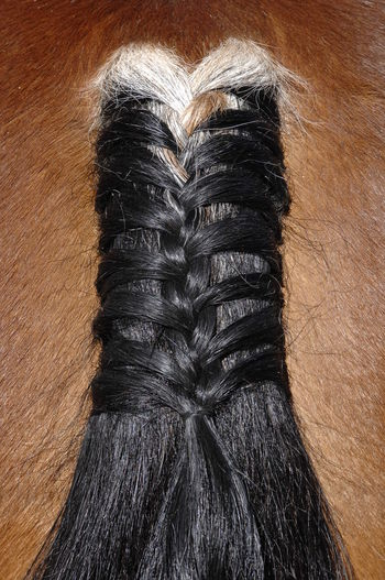 braided fashioned horse tail Horse Animal Fashion Tail Pattern Texture Hair Close-up No People Animal Hair Mammal Pet Pigtail Plait Braid Horse Tail Braided Hair Braided Beauty In Nature Fur Skin Detail Details Of Nature Animal Themes